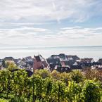 Panorama Blick aus den Weinbergen über die Ansichten von Meersburg auf den Bodensee.  Im Vordergrund sind Weinberge zu sehen, im Hintergrund ragen einige Häuser Meersburgs vor dem Bodensee hervor.