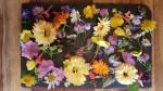 Unterschiedliche Blütenköpfe liegen auf einem schwarzen Brett