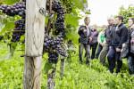 Im Vordergrund sind Weinreben abgebildet. Im Hintergrund steht eine Personengruppe.