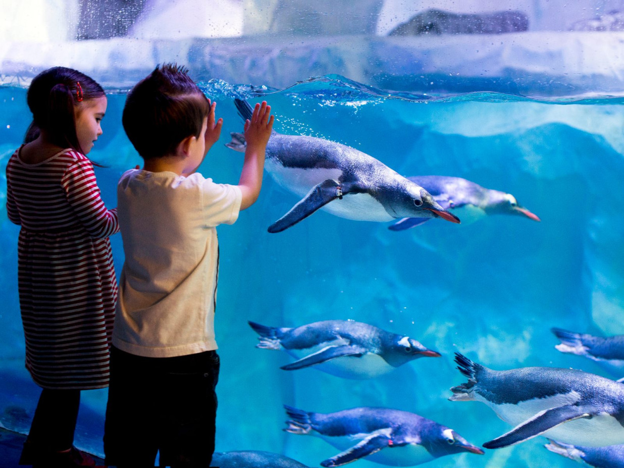 Zwei Kinder stehen an einer Glaswand eines Aquariums des SEA LIFE. Im Wasserbecken taucht eine Gruppe von Pinguinen vorbei.